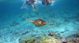 Best Snorkelling Spots in Kauai